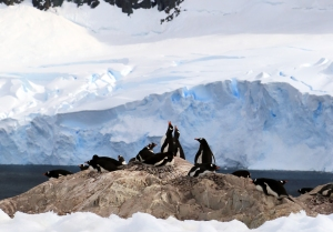 Calving of ice causes consternation among penguins.